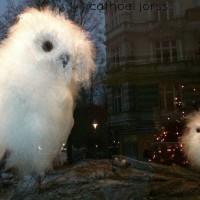 shop of owls