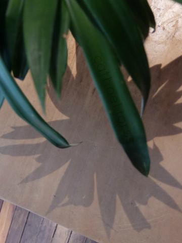HoL H2O green shadow brown dog