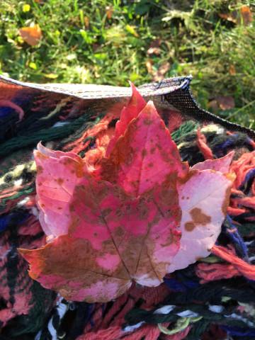HoL H20 autumn leaf in picnic
